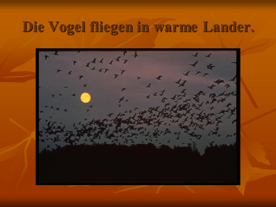 Die Vogel fliegen in warme Lander.