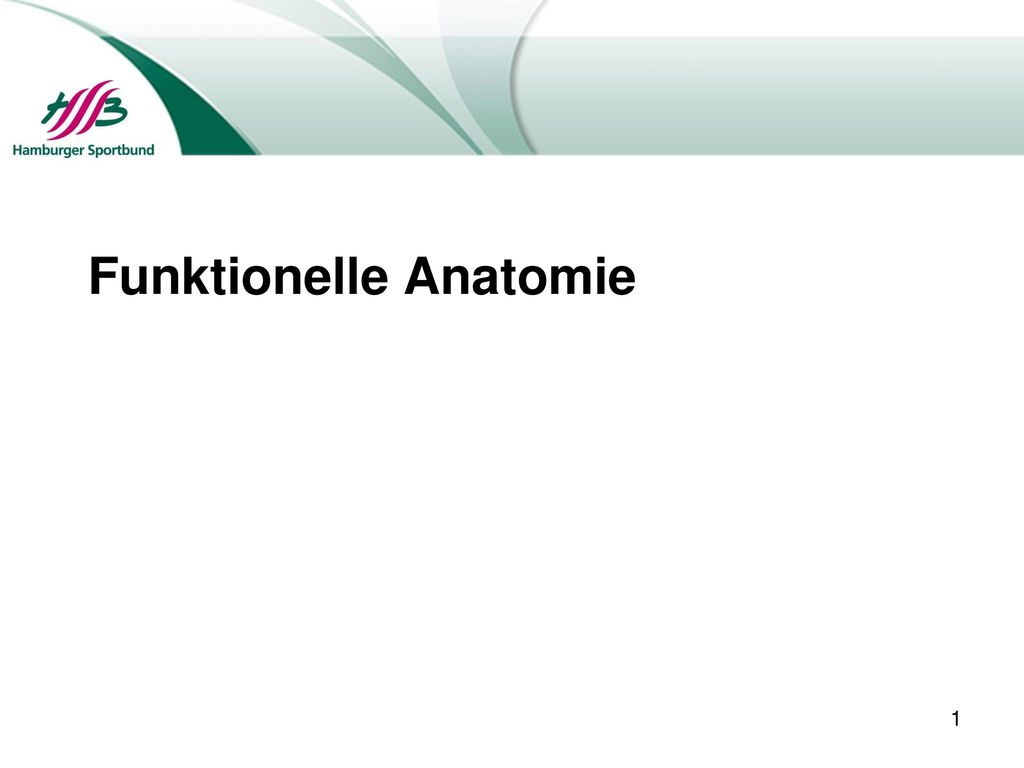 Funktionelle Anatomie - ppt herunterladen