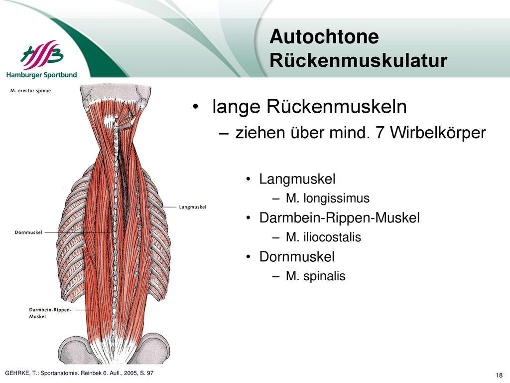 Niedlich Anatomie Der Rückenmuskulatur Bilder - Anatomie Von ...