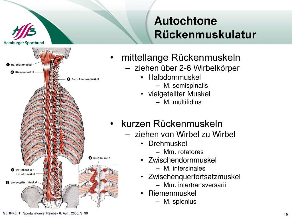 Nett Leisten Muskeln Anatomie Zeitgenössisch - Anatomie Ideen ...