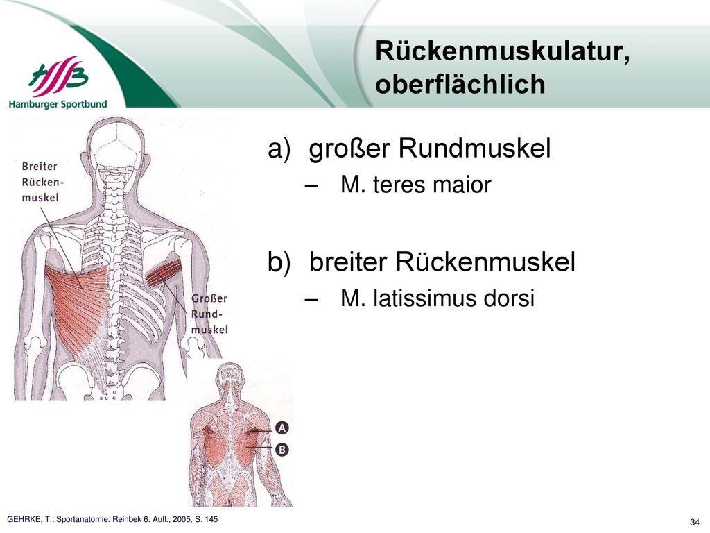 Atemberaubend Anatomie Untere Rückenmuskulatur Bilder - Anatomie Von ...
