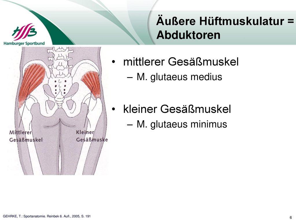 Fantastisch Posterior Hüftmuskulatur Fotos - Menschliche Anatomie ...