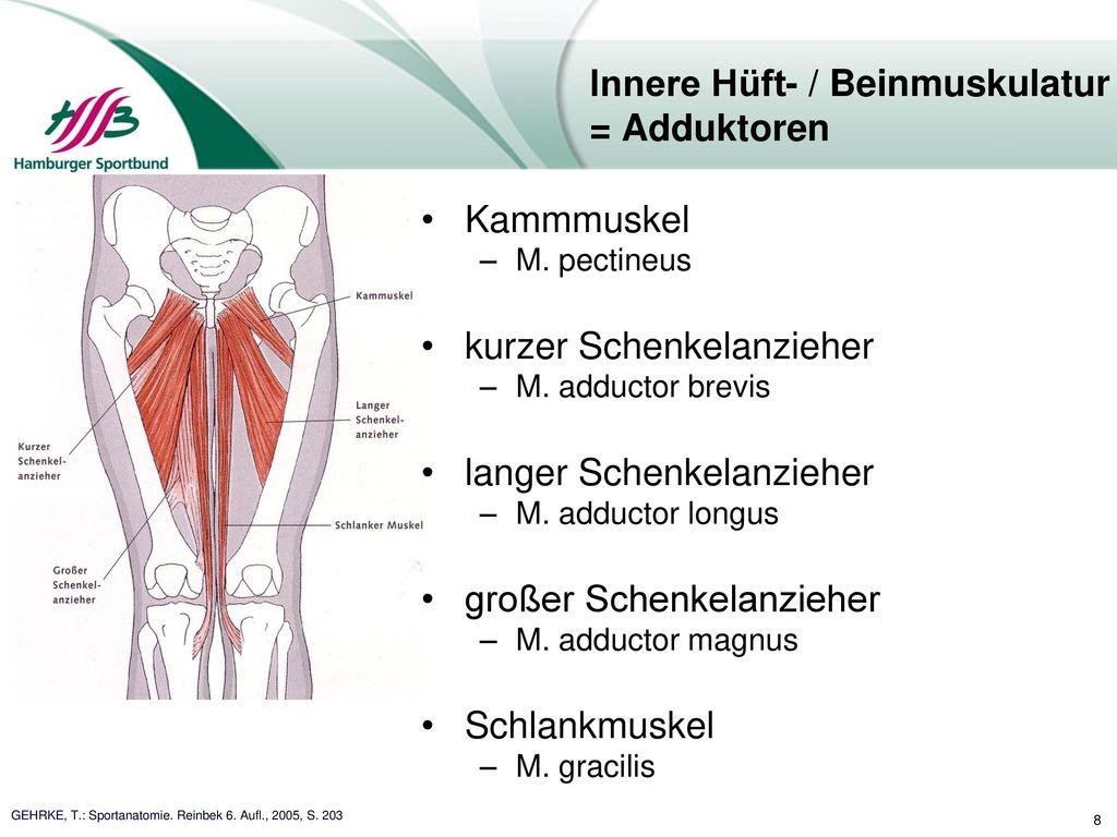 Groß Hüft Und Beinmuskulatur Ideen - Anatomie Ideen - finotti.info