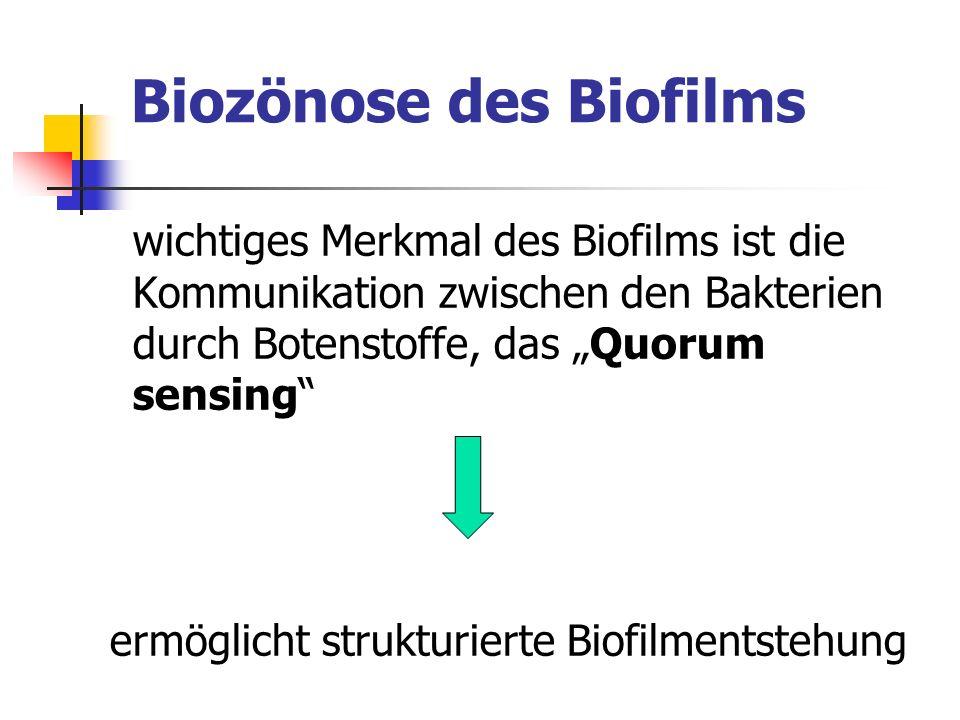 Biozönose des Biofilms