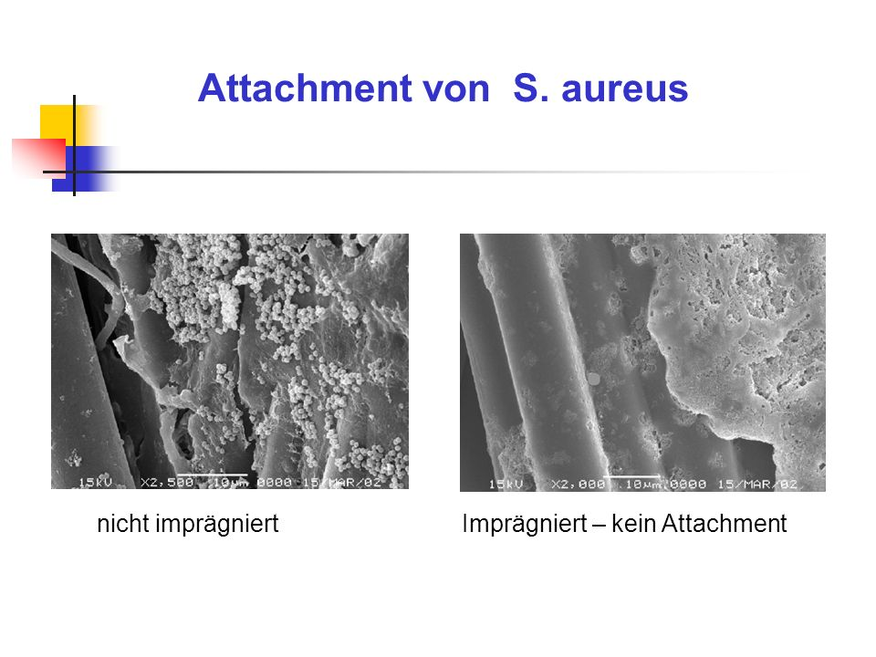 Attachment von S. aureus