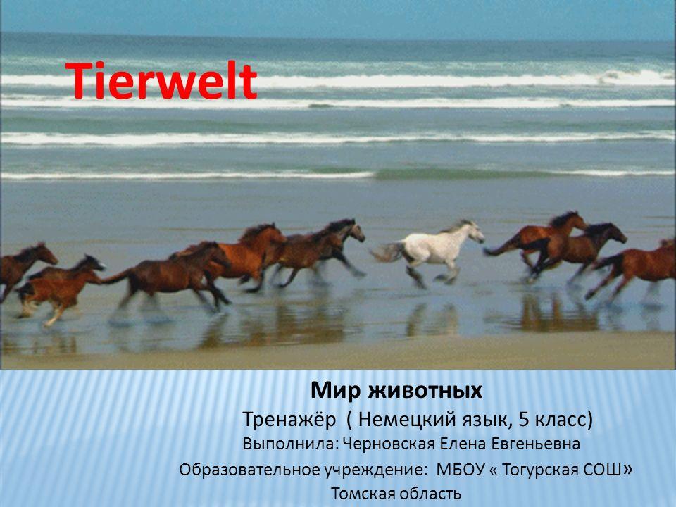 Tierwelt Мир животных Тренажёр ( Немецкий язык, 5 класс)