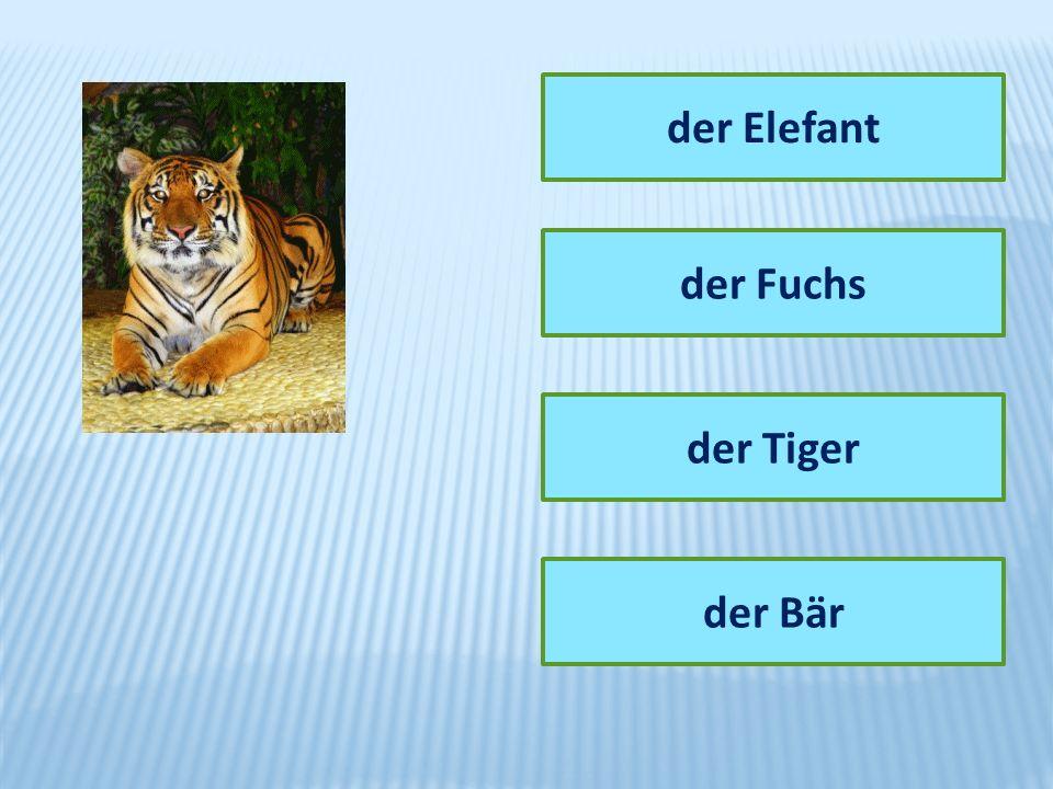 der Elefant der Fuchs der Tiger der Bär