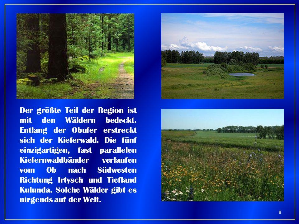 Der größte Teil der Region ist mit den Wäldern bedeckt