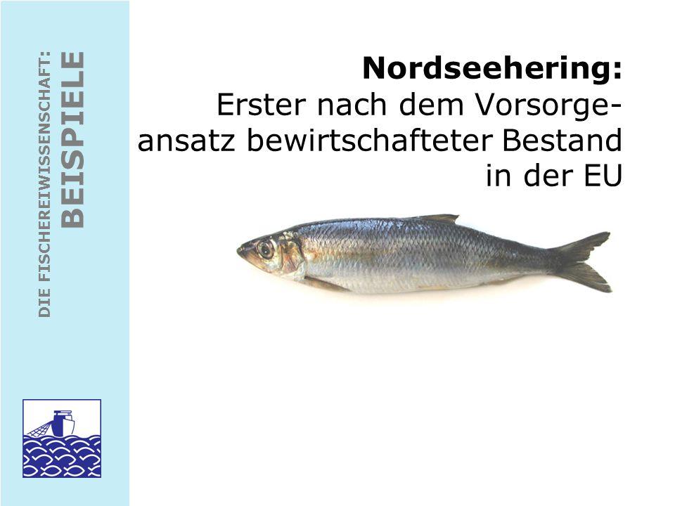 Nordseehering: Erster nach dem Vorsorge- ansatz bewirtschafteter Bestand in der EU