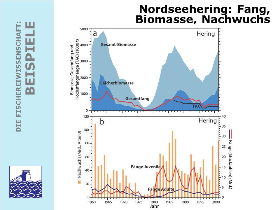 Nordseehering: Fang, Biomasse, Nachwuchs