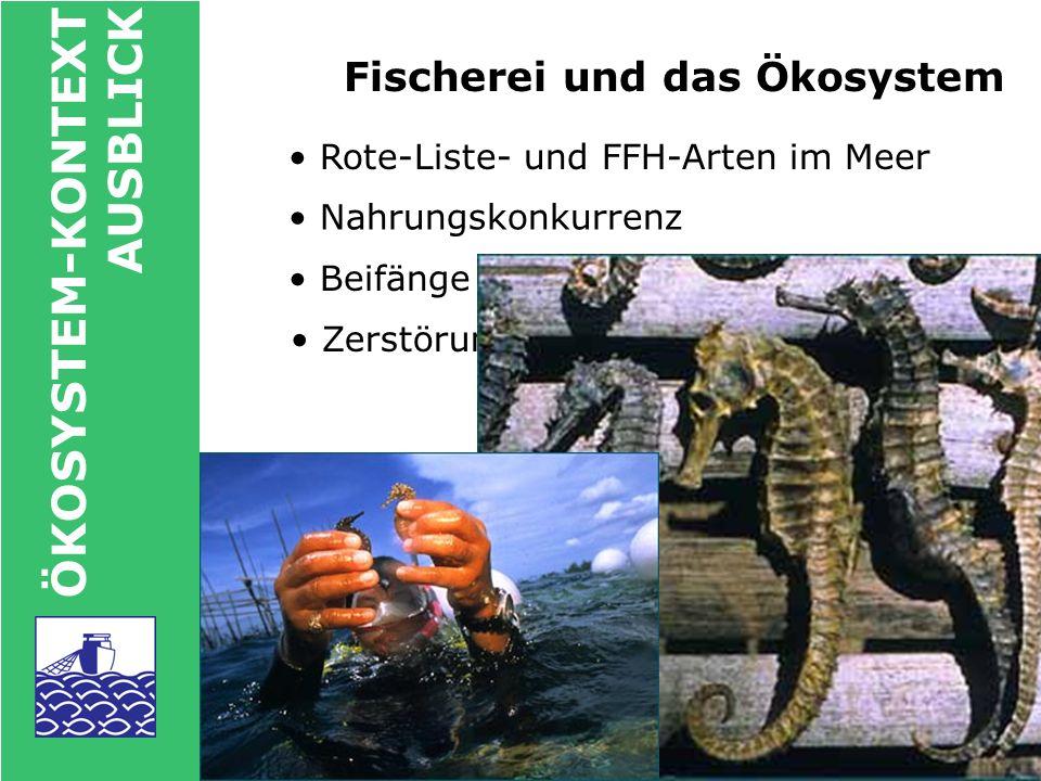 Fischerei und das Ökosystem