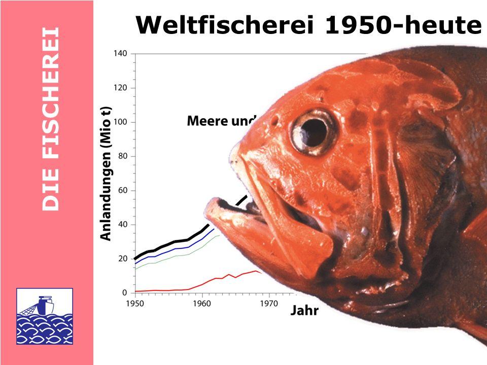 Weltfischerei 1950-heute DIE FISCHEREI
