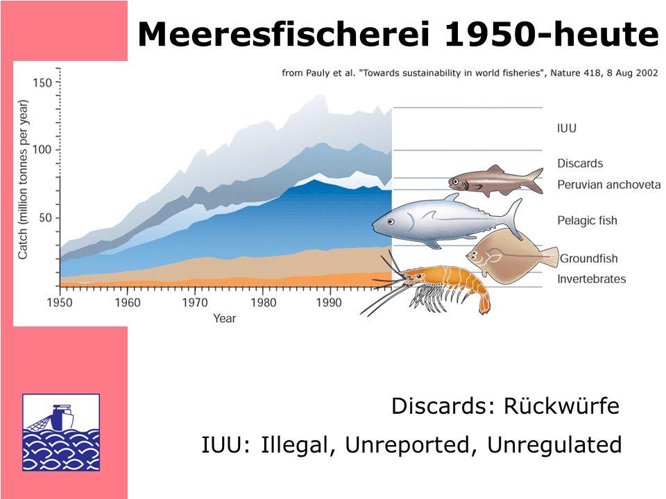 Meeresfischerei 1950-heute