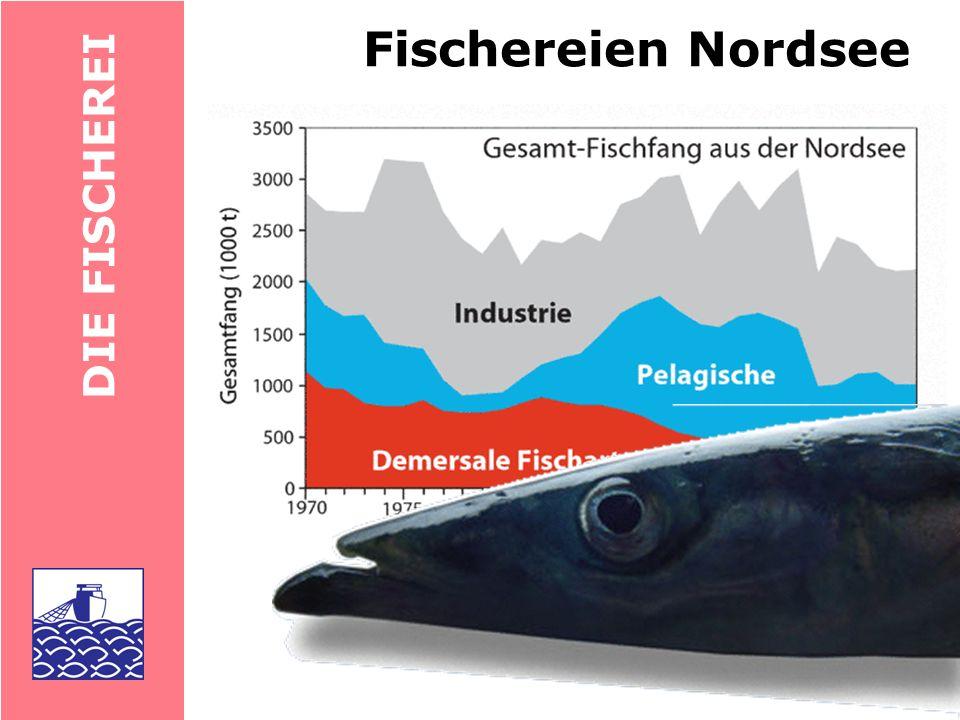 Fischereien Nordsee DIE FISCHEREI