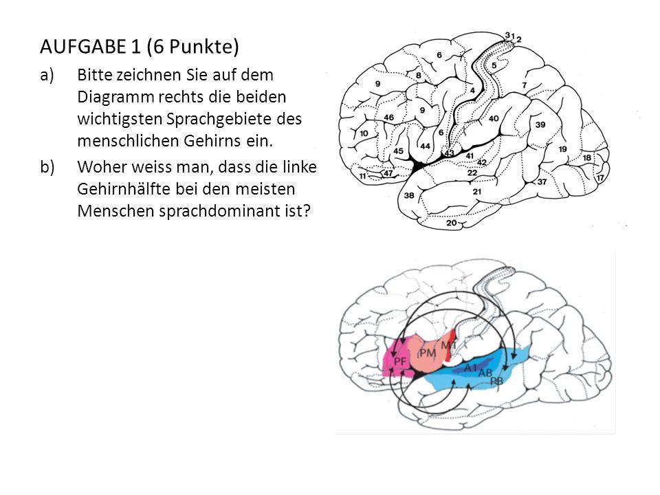 AUFGABE 1 (6 Punkte) Bitte zeichnen Sie auf dem Diagramm rechts die beiden wichtigsten Sprachgebiete des menschlichen Gehirns ein.
