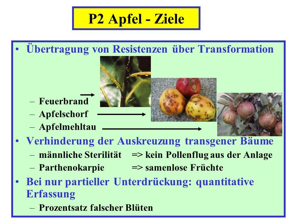 P2 Apfel - Ziele Übertragung von Resistenzen über Transformation