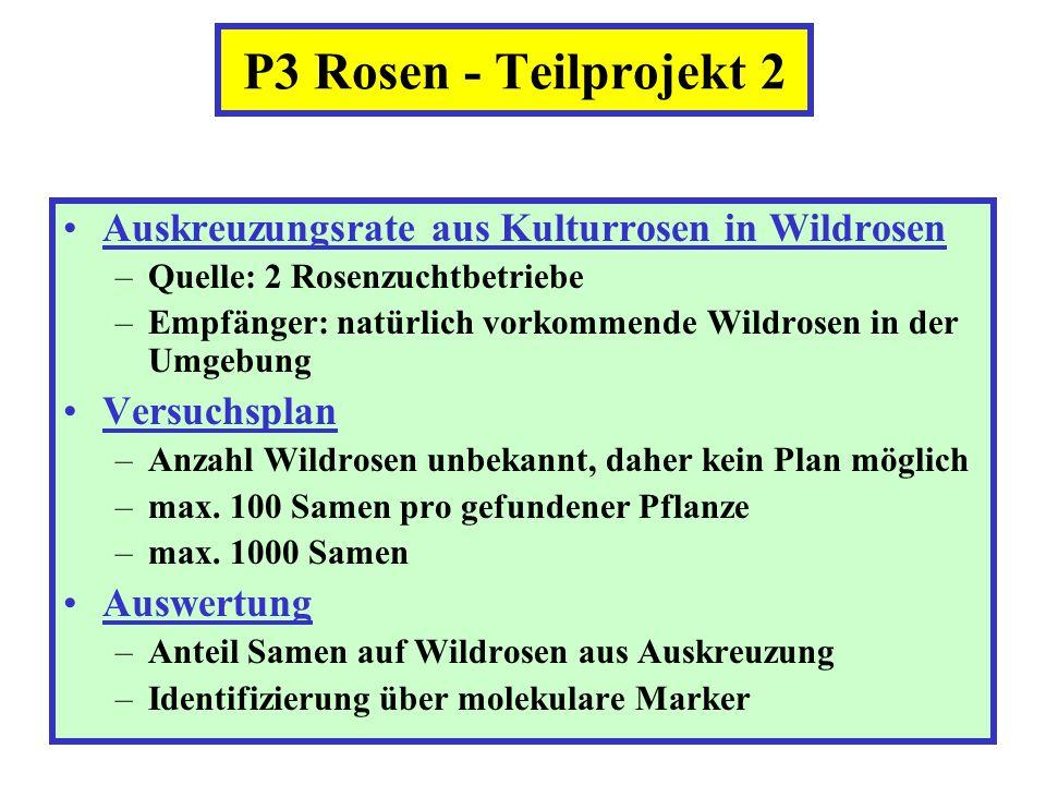 P3 Rosen - Teilprojekt 2 Auskreuzungsrate aus Kulturrosen in Wildrosen