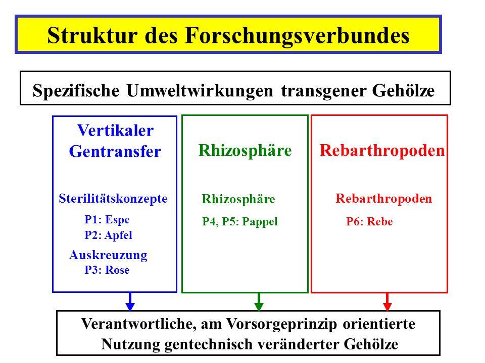 Struktur des Forschungsverbundes