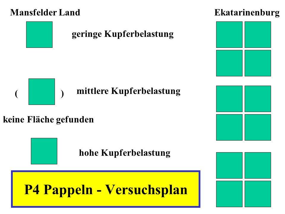 P4 Pappeln - Versuchsplan