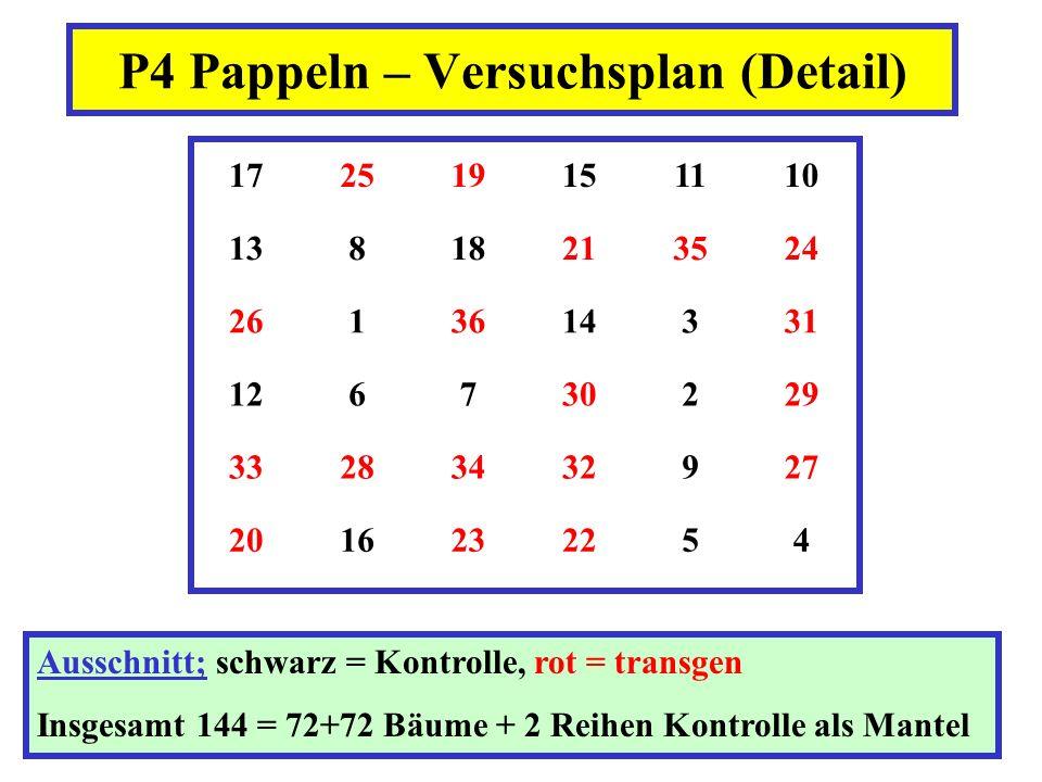 P4 Pappeln – Versuchsplan (Detail)