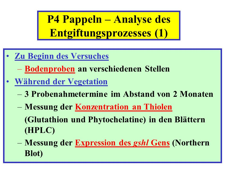 P4 Pappeln – Analyse des Entgiftungsprozesses (1)