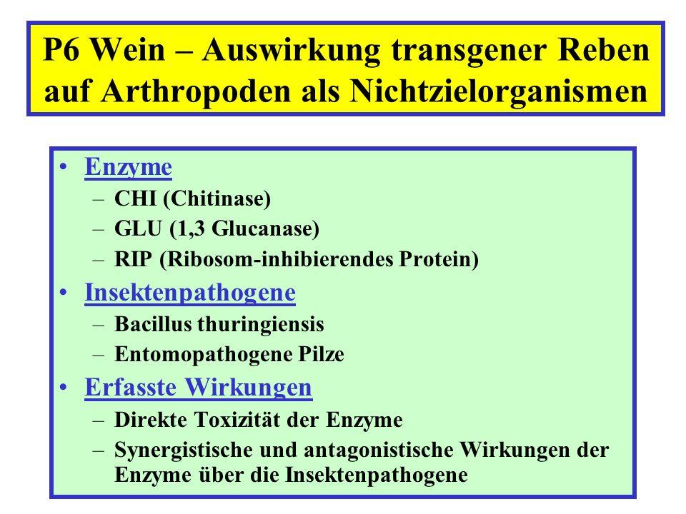 P6 Wein – Auswirkung transgener Reben auf Arthropoden als Nichtzielorganismen