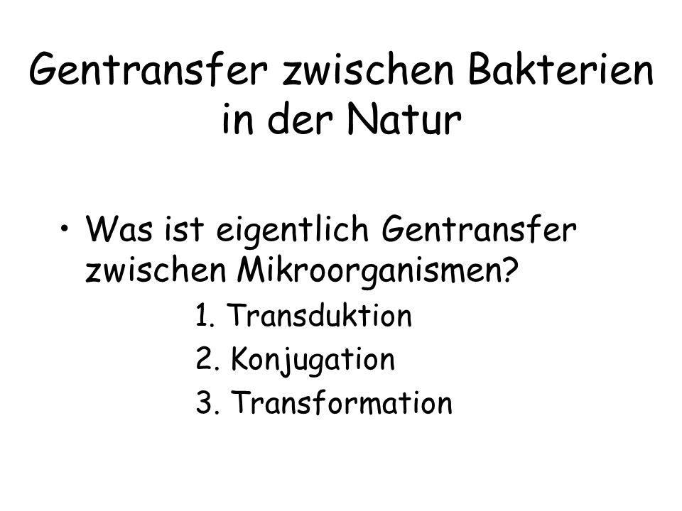 Gentransfer zwischen Bakterien in der Natur