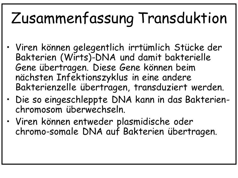 Zusammenfassung Transduktion