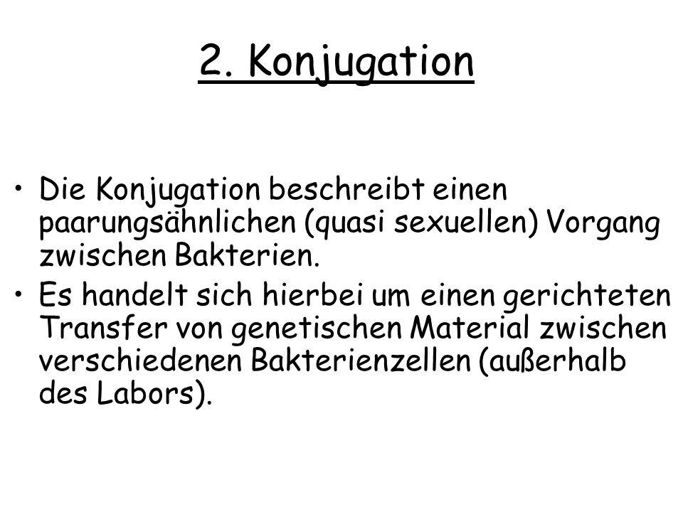 2. Konjugation Die Konjugation beschreibt einen paarungsähnlichen (quasi sexuellen) Vorgang zwischen Bakterien.
