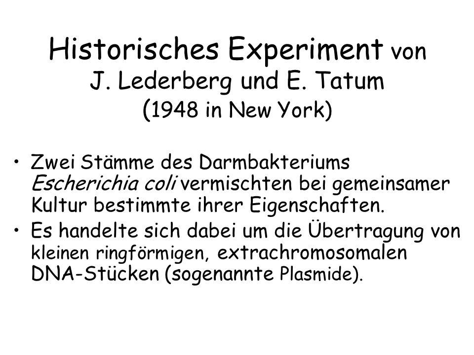 Historisches Experiment von J. Lederberg und E