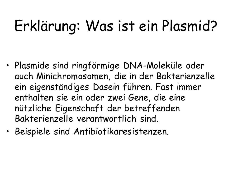 Erklärung: Was ist ein Plasmid