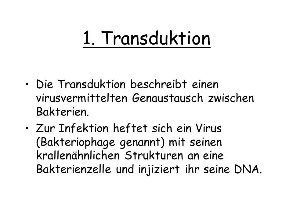 1. Transduktion Die Transduktion beschreibt einen virusvermittelten Genaustausch zwischen Bakterien.