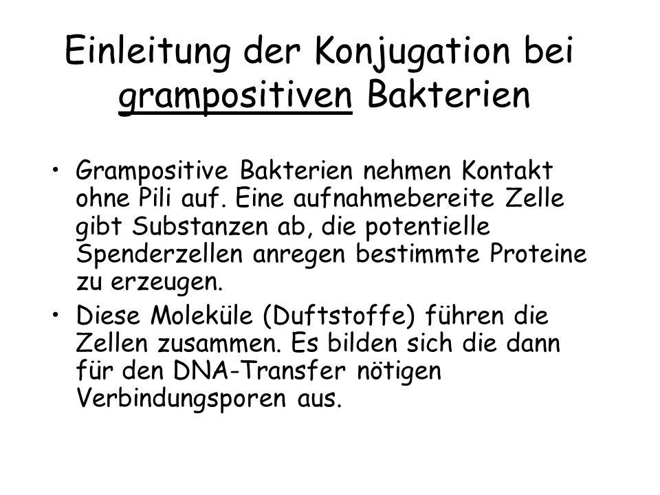 Einleitung der Konjugation bei grampositiven Bakterien