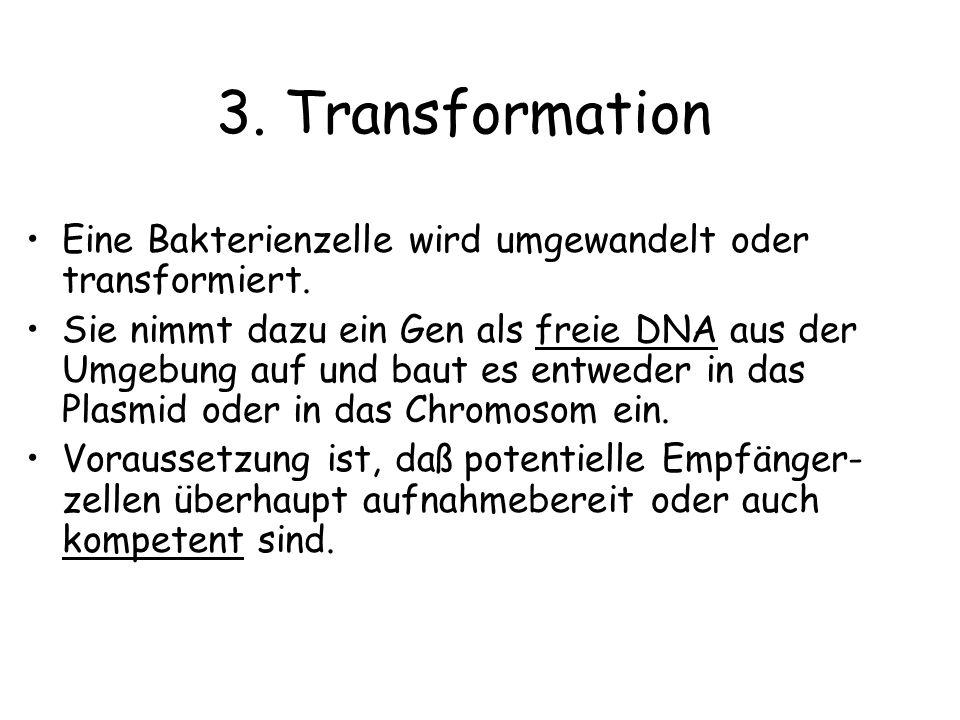 3. Transformation Eine Bakterienzelle wird umgewandelt oder transformiert.