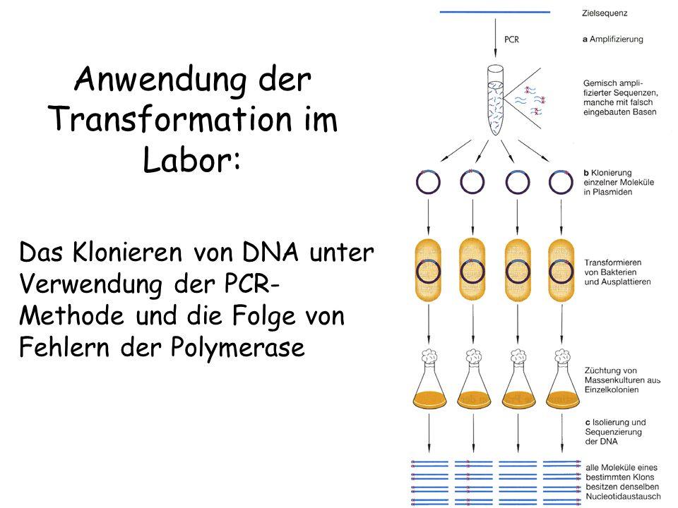 Anwendung der Transformation im Labor:
