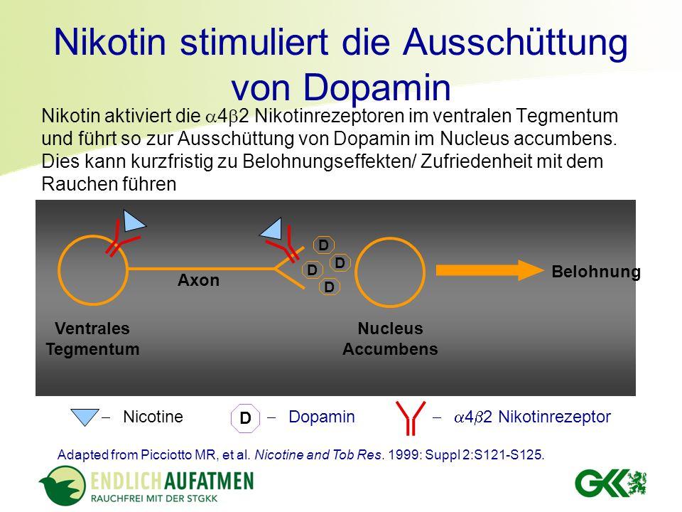 Nikotin stimuliert die Ausschüttung von Dopamin