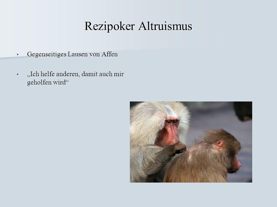 Rezipoker Altruismus Gegenseitiges Lausen von Affen