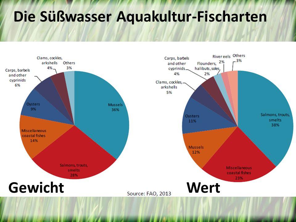 Die Süßwasser Aquakultur-Fischarten