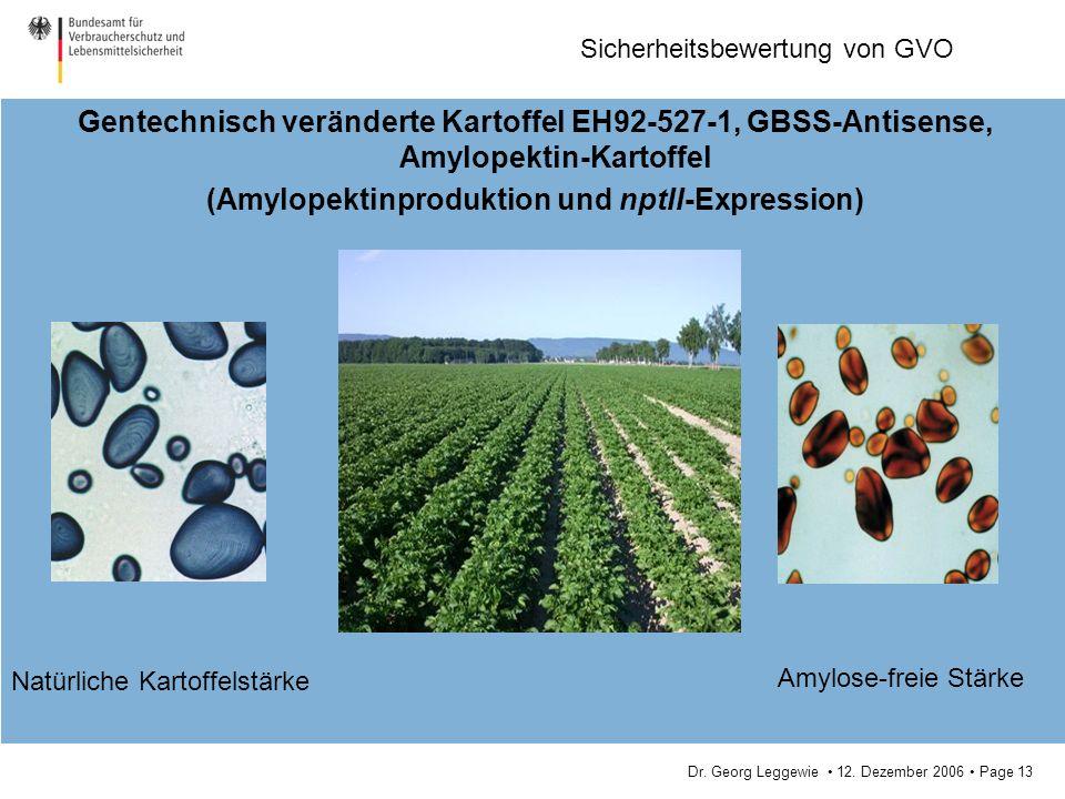 (Amylopektinproduktion und nptII-Expression)
