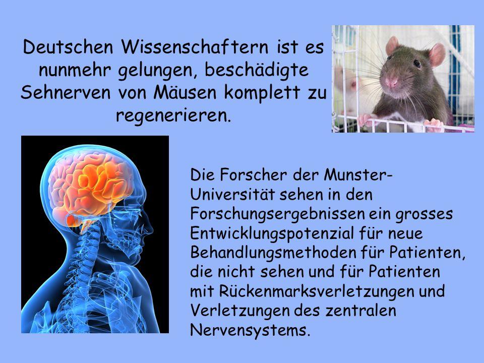 Deutschen Wissenschaftern ist es nunmehr gelungen, beschädigte Sehnerven von Mäusen komplett zu regenerieren.