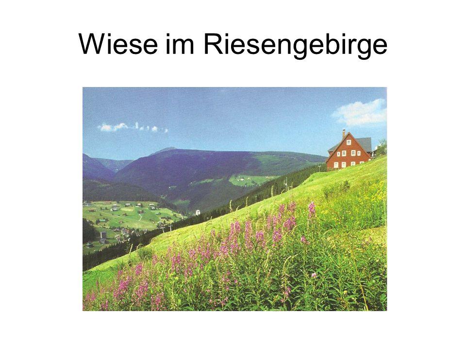 Wiese im Riesengebirge