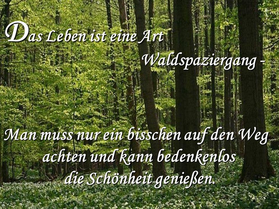 Das Leben ist eine Art Waldspaziergang -