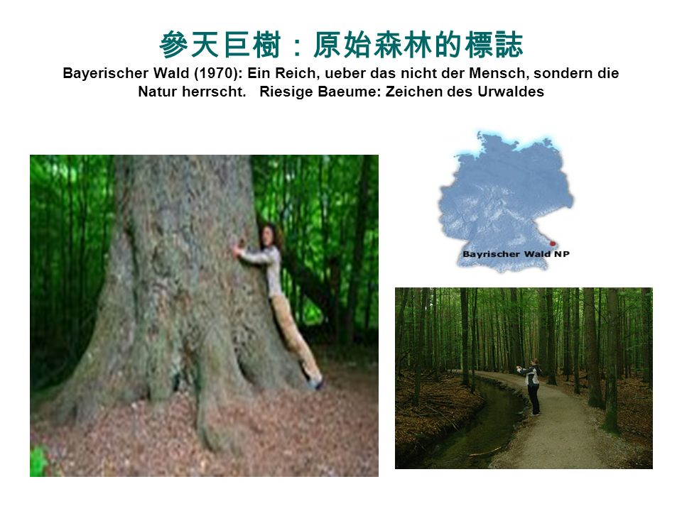 參天巨樹:原始森林的標誌 Bayerischer Wald (1970): Ein Reich, ueber das nicht der Mensch, sondern die Natur herrscht.