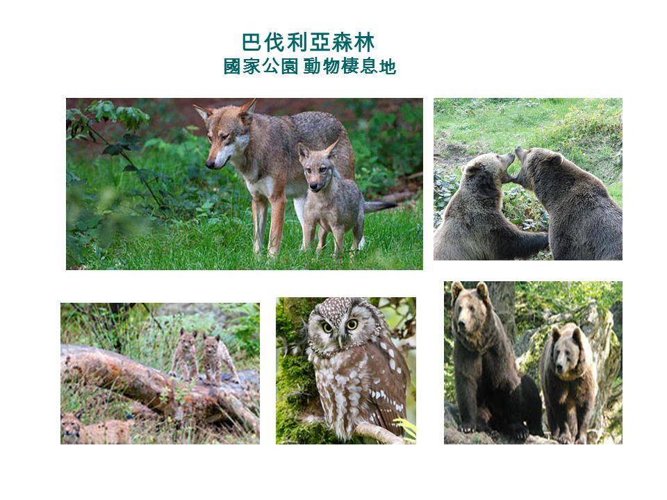 巴伐利亞森林 國家公園 動物棲息地 Im NP BW