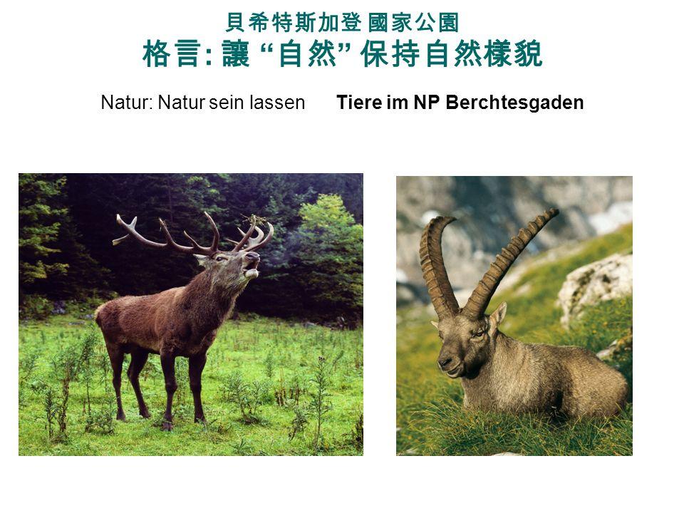 貝希特斯加登 國家公園 格言: 讓 自然 保持自然樣貌 Natur: Natur sein lassen Tiere im NP Berchtesgaden