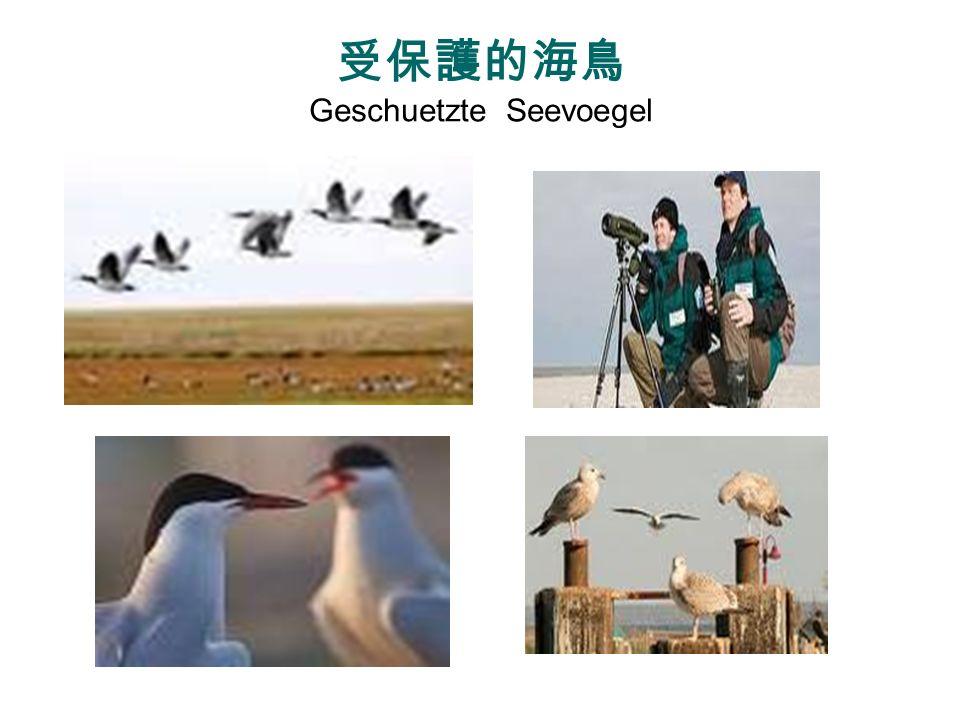 受保護的海鳥 Geschuetzte Seevoegel