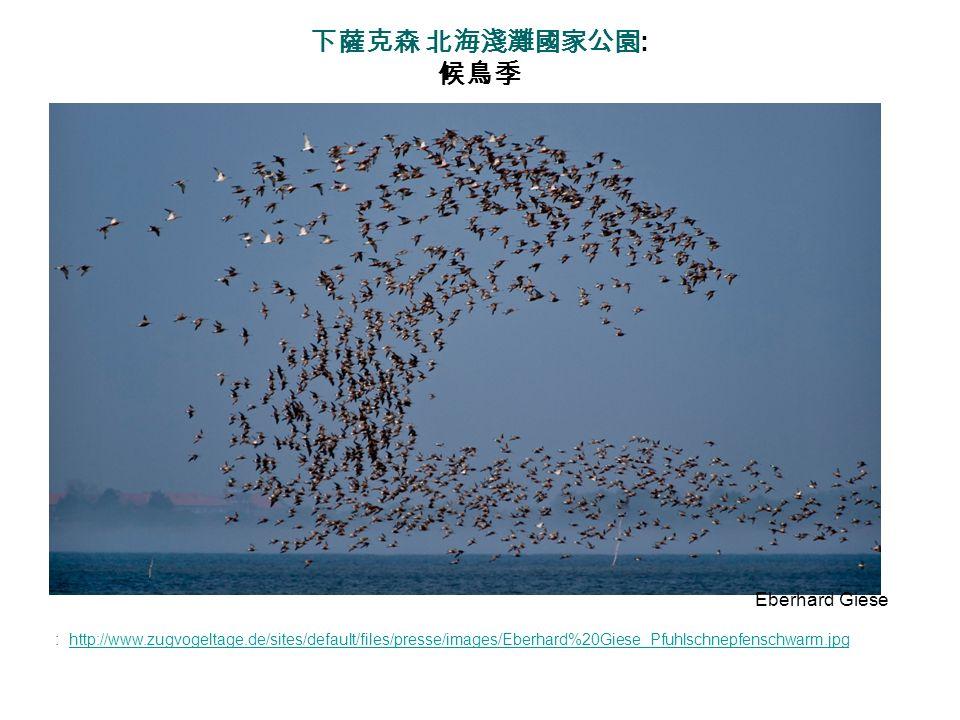 下薩克森 北海淺灘國家公園: 候鳥季 Eberhard Giese