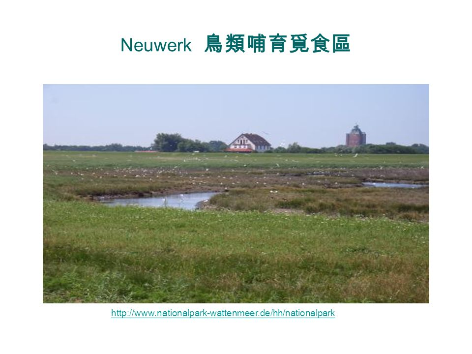 Neuwerk 鳥類哺育覓食區 http://www.nationalpark-wattenmeer.de/hh/nationalpark