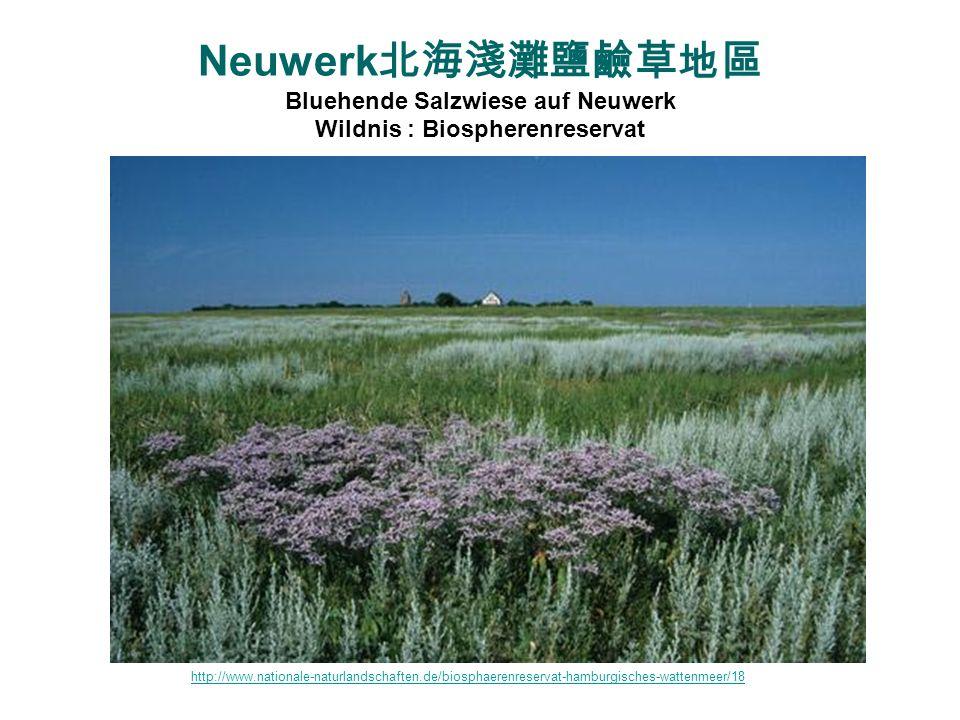 Neuwerk北海淺灘鹽鹼草地區 Bluehende Salzwiese auf Neuwerk Wildnis : Biospherenreservat