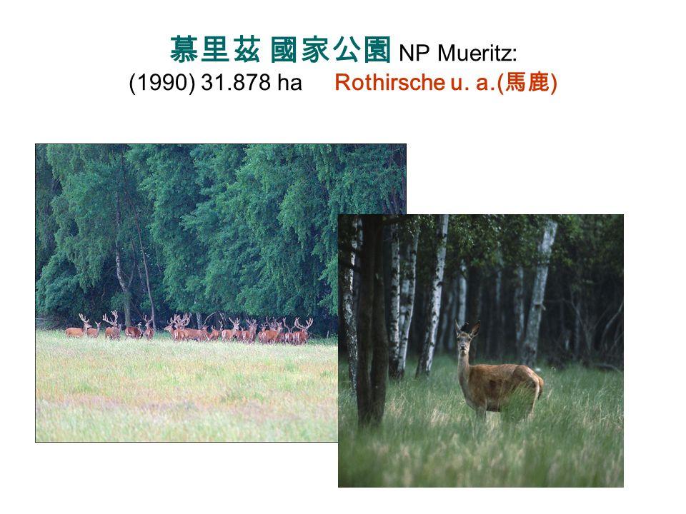 慕里茲 國家公園 NP Mueritz: (1990) 31.878 ha Rothirsche u. a.(馬鹿)